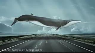 پارت یازدهم و دوازدهم رمان نهنگ آبی