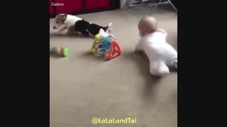 رابطه عالی کودک و سگ